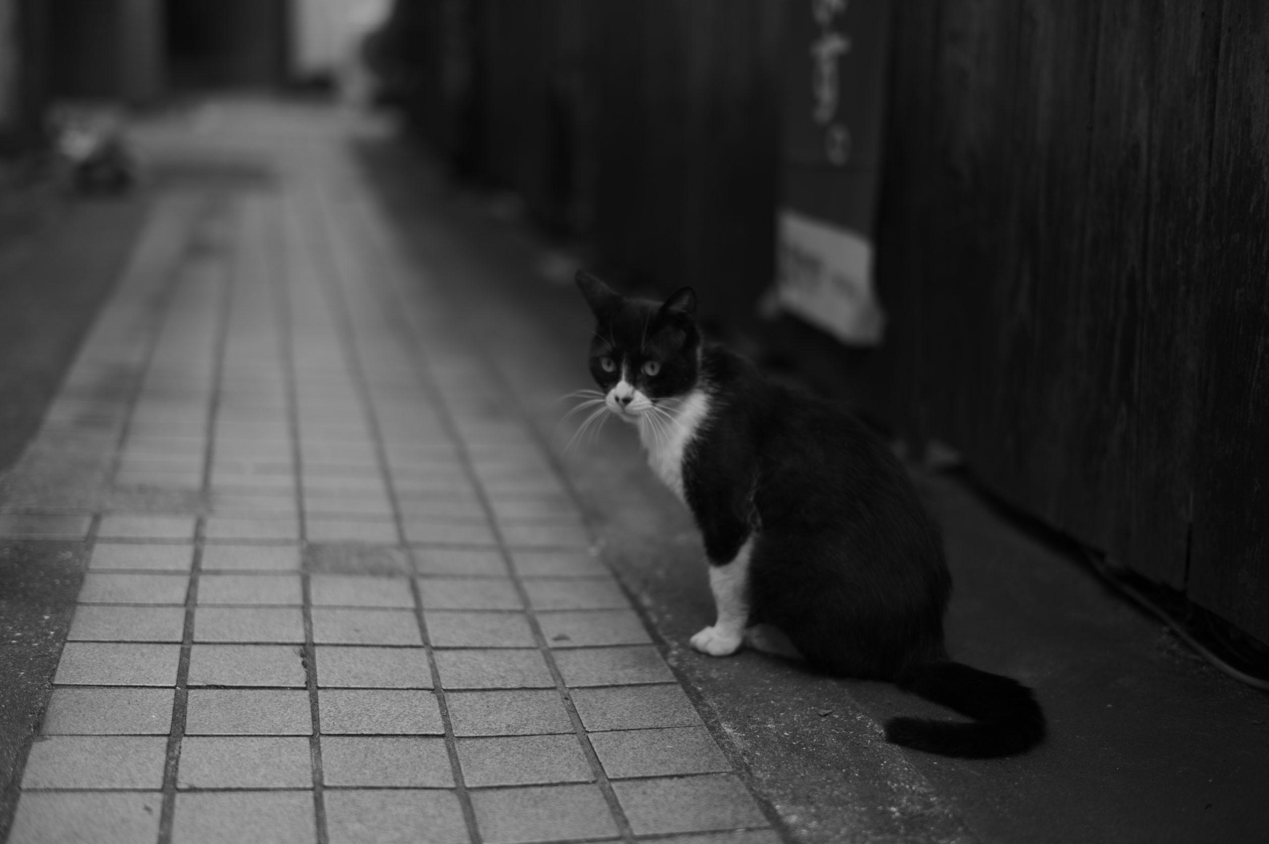 Leica M モノクローム 作例