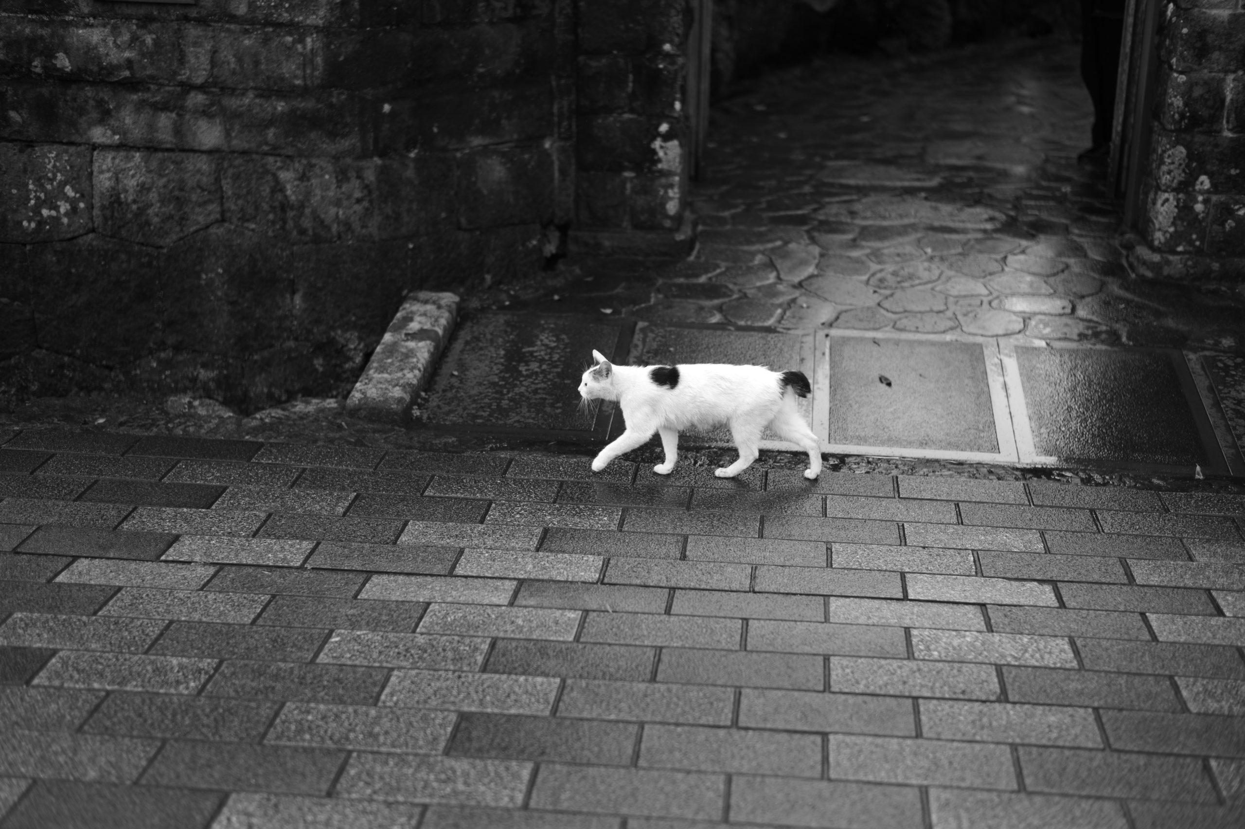 モノクロ写真 Leica Monochrome6