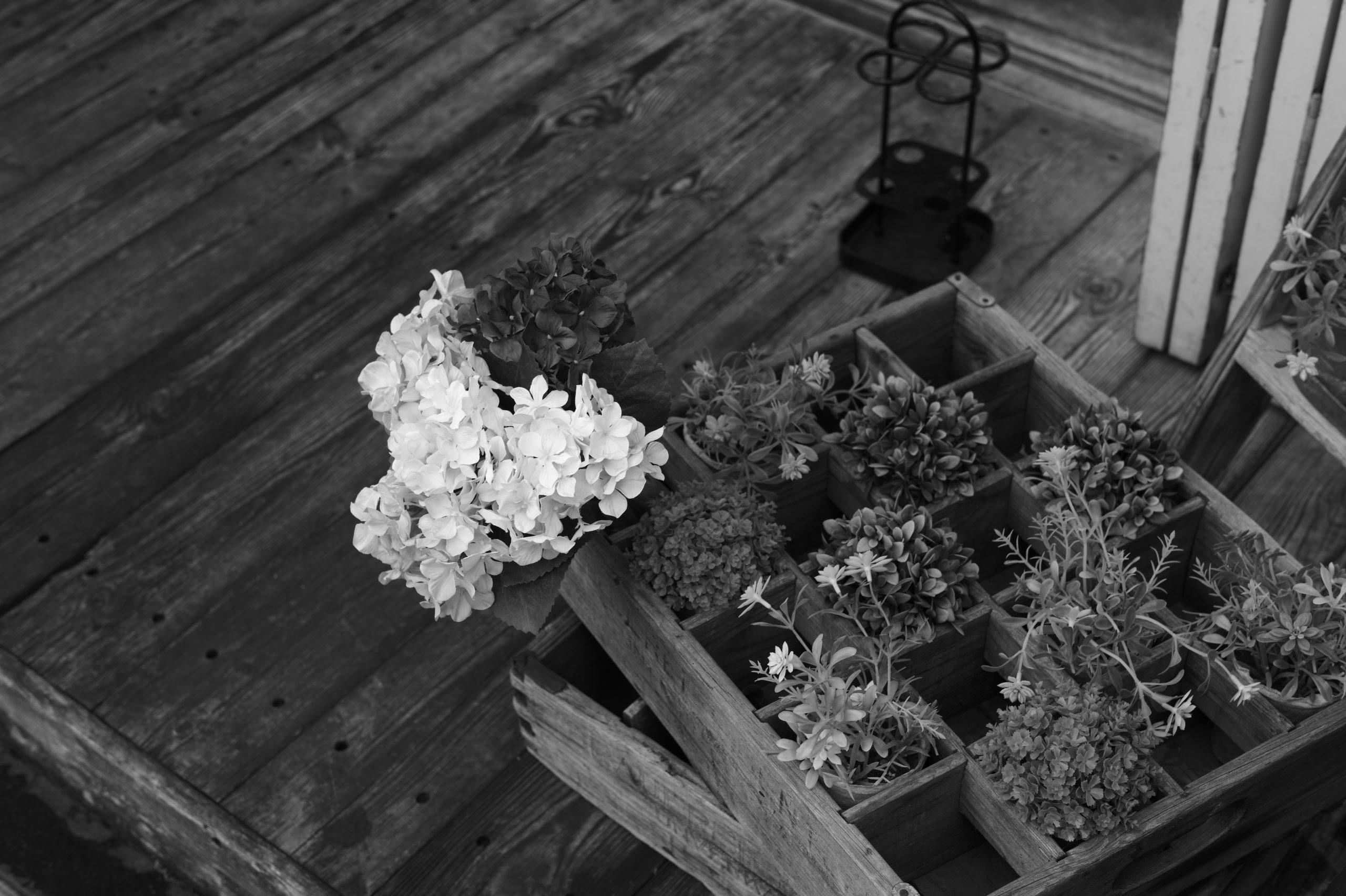 モノクロ写真 Leica Monochrome