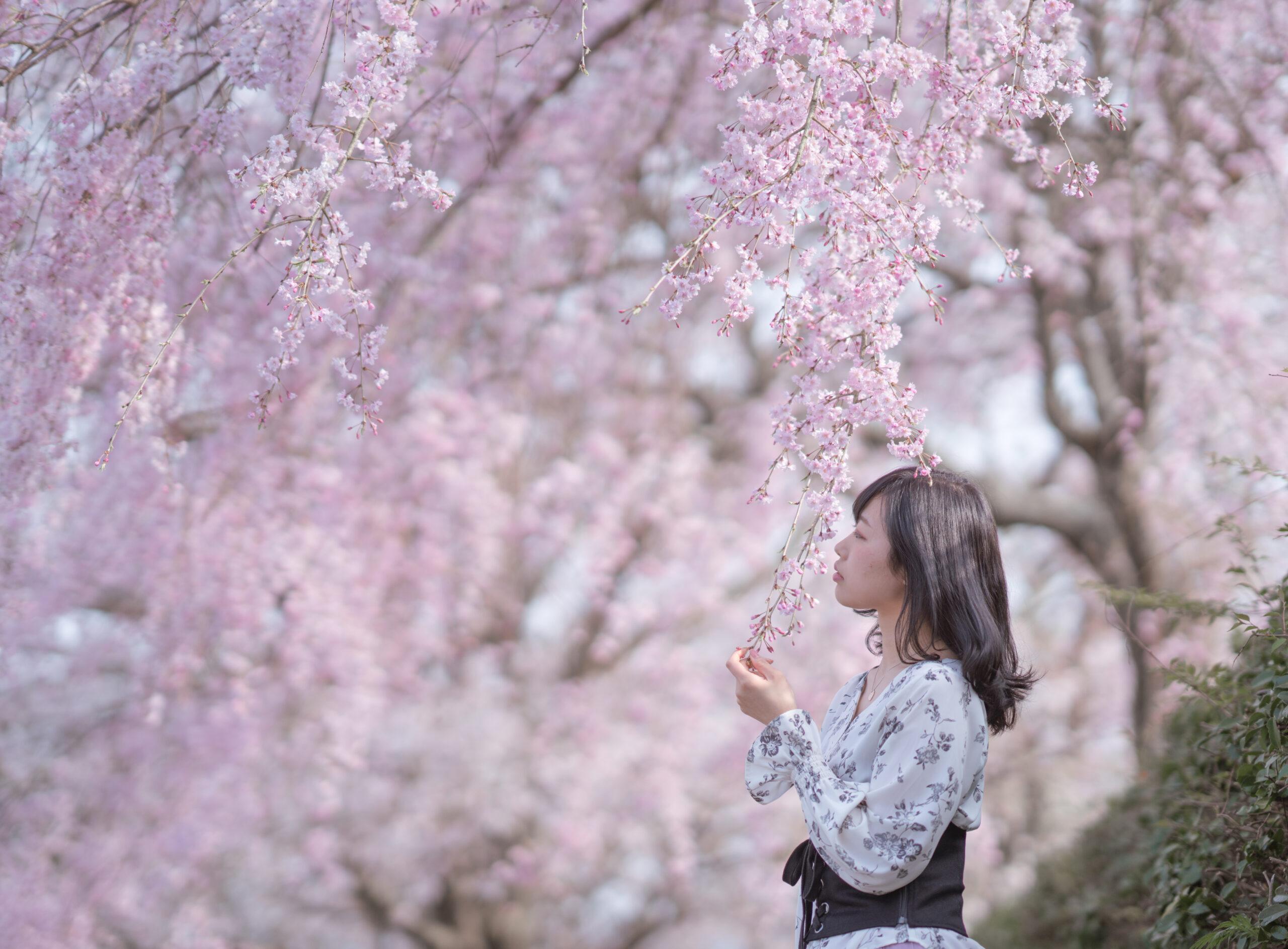 長崎 桜 ポートレート